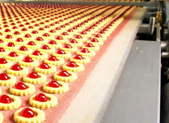 biscuit sector essay